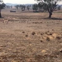 Tamworth affected by Drought